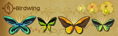Birdwing Set§Flutterpedia