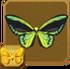 Cairns Birdwing§Headericon