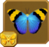 Gold Banded Forester§Headericon