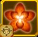 Acraea Set§AF3 100%
