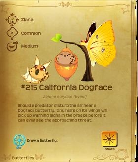 California Dogface§Flutterpedia