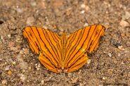 358 Common Maplet