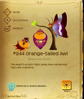 Orange-tailed Awl§Flutterpedia