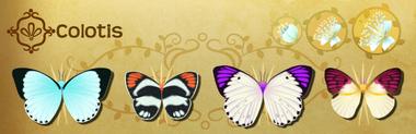 Colotis Set§Flutterpedia
