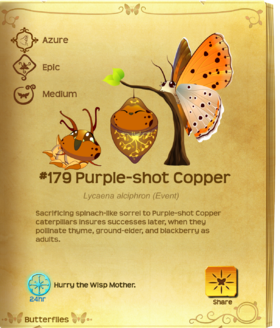Purple-shot Copper§Flutterpedia