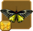 Golden Birdwing§Headericon