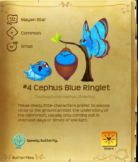 Cephus Blue Ringlet§Flutterpedia