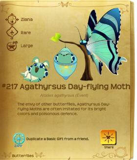 Agathyrsus Day-flying Moth§Flutterpedia