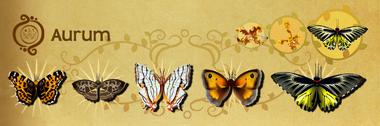 Aurum Set§Flutterpedia