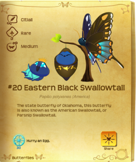 Eastern Black Swallowtail§Flutterpedia