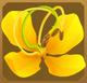Acraea Set§DecorationSingle ExclusiveLeft