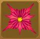Turmeric Set§AF 50%