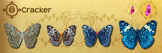 Cracker Set§Flutterpedia OffEvent