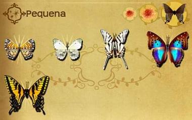 Pequena Set§Flutterpedia