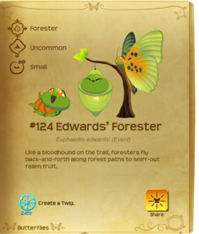 Edwards' Forester§Flutterpedia