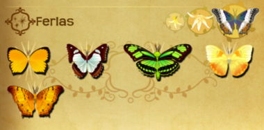 Ferias Set§Flutterpedia
