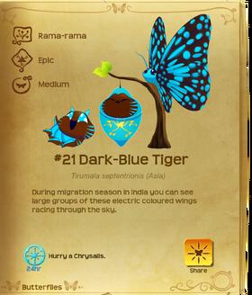Dark-Blue Tiger§Flutterpedia