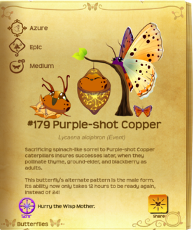 Purple-shot Copper§Flutterpedia UpgradedAlt