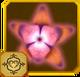 Acraea Set§AF6 100%