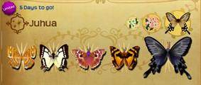 Juhua Set§Flutterpedia