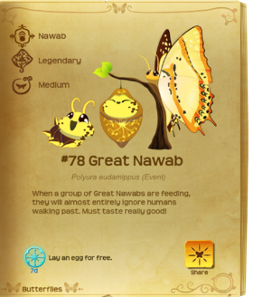 Great Nawab§Flutterpedia