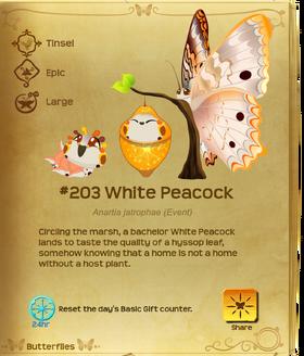 White Peacock§Flutterpedia