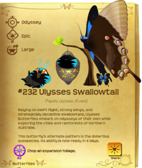 Ulysses Swallowtail§Flutterpedia UpgradedAlt