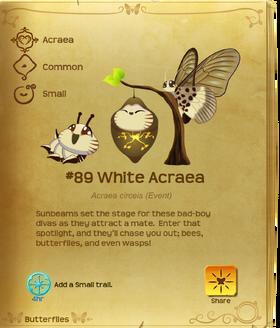 White Acraea§Flutterpedia