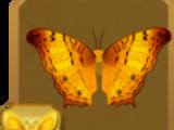 Male Orange-barred Sulphur