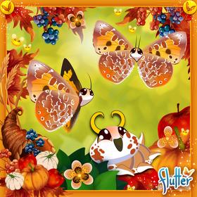 Harvester Butterfly§Facebook