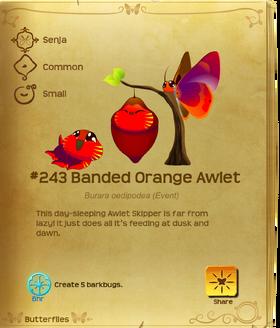 Banded Orange Awlet§Flutterpedia
