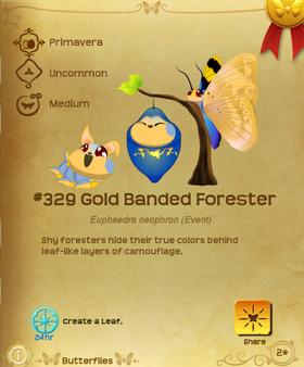 Gold Banded Forester§Flutterpedia