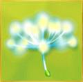 Dandelion§Seed