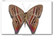 378 Rainbow Sombermark