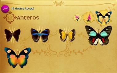 Anteros Set§Flutterpedia