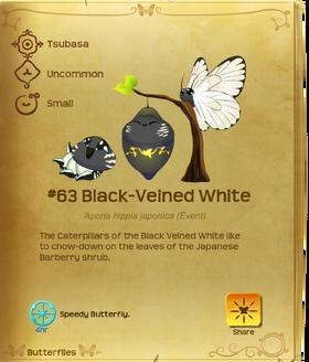 Black-Veined White§Flutterpedia