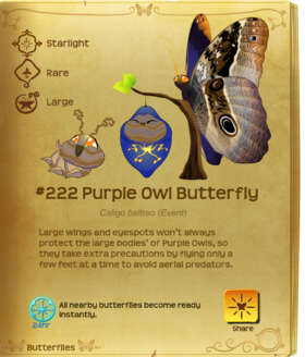 Purple Owl Butterfly§Flutterpedia