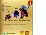 Redbreast Swallowtail