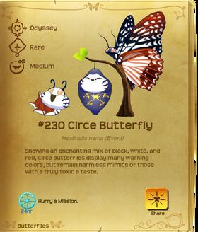 Circe Butterfly§Flutterpedia