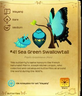 Sea Green Swallowtail§Flutterpedia