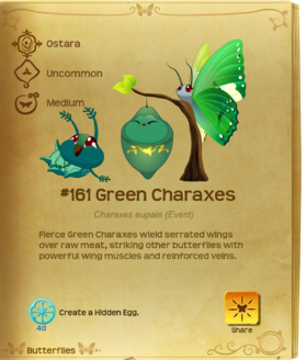 Green Charaxes§Flutterpedia