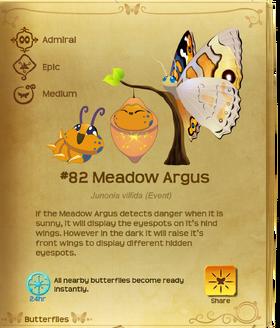 Meadow Argus§Flutterpedia