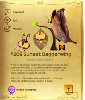 Sunset Daggerwing§Flutterpedia Upgraded