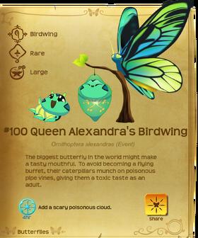 Queen Alexandra's Birdwing§Flutterpedia