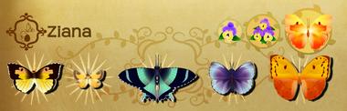 Ziana Set§Flutterpedia