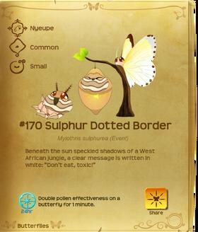 Sulphur Dotted Border§Flutterpedia