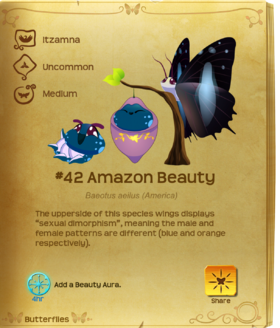 Amazon Beauty§Flutterpedia