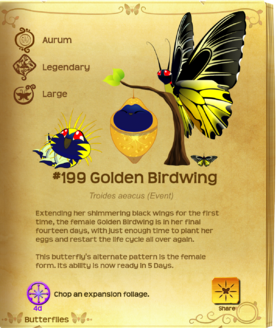 Golden Birdwing§Flutterpedia Upgraded