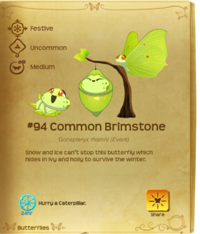 Common Brimstone§Flutterpedia