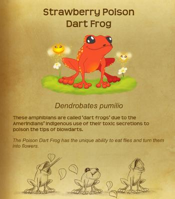 Strawberry Poison Dart Frog§Flutterpedia